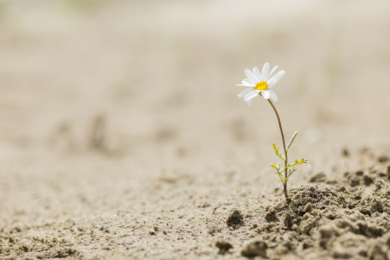 resilience-fleur-propulsens